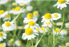 一年を通して<br /> 綺麗な花を楽しめる庭園
